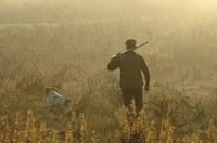 Trucos con los perros en verano antes de la caza en media veda